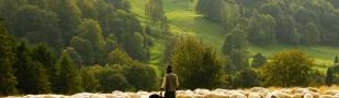 (Audio) La relación pastoral