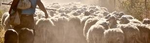 Tres (3) referentes incorrectos para el trabajo pastoral